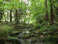 成田山公園(夏)