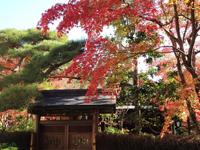 成田山公園(紅葉)