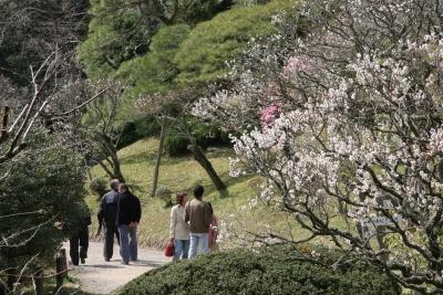 広大な公園に広がる460本の梅林